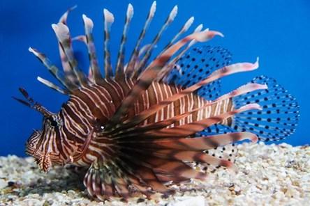 Du lịch Nha Trang - Sinh vật được nuôi trong Viện Hải Dương Học