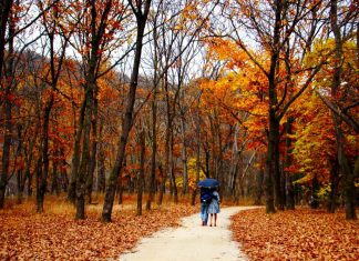 Du lịch Hàn Quốc mùa thu thời tiết lý tưởng nhất trong năm